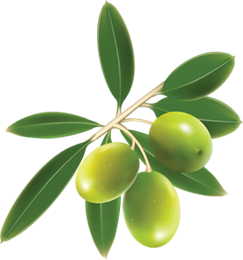 uploads olives olives PNG14327 65