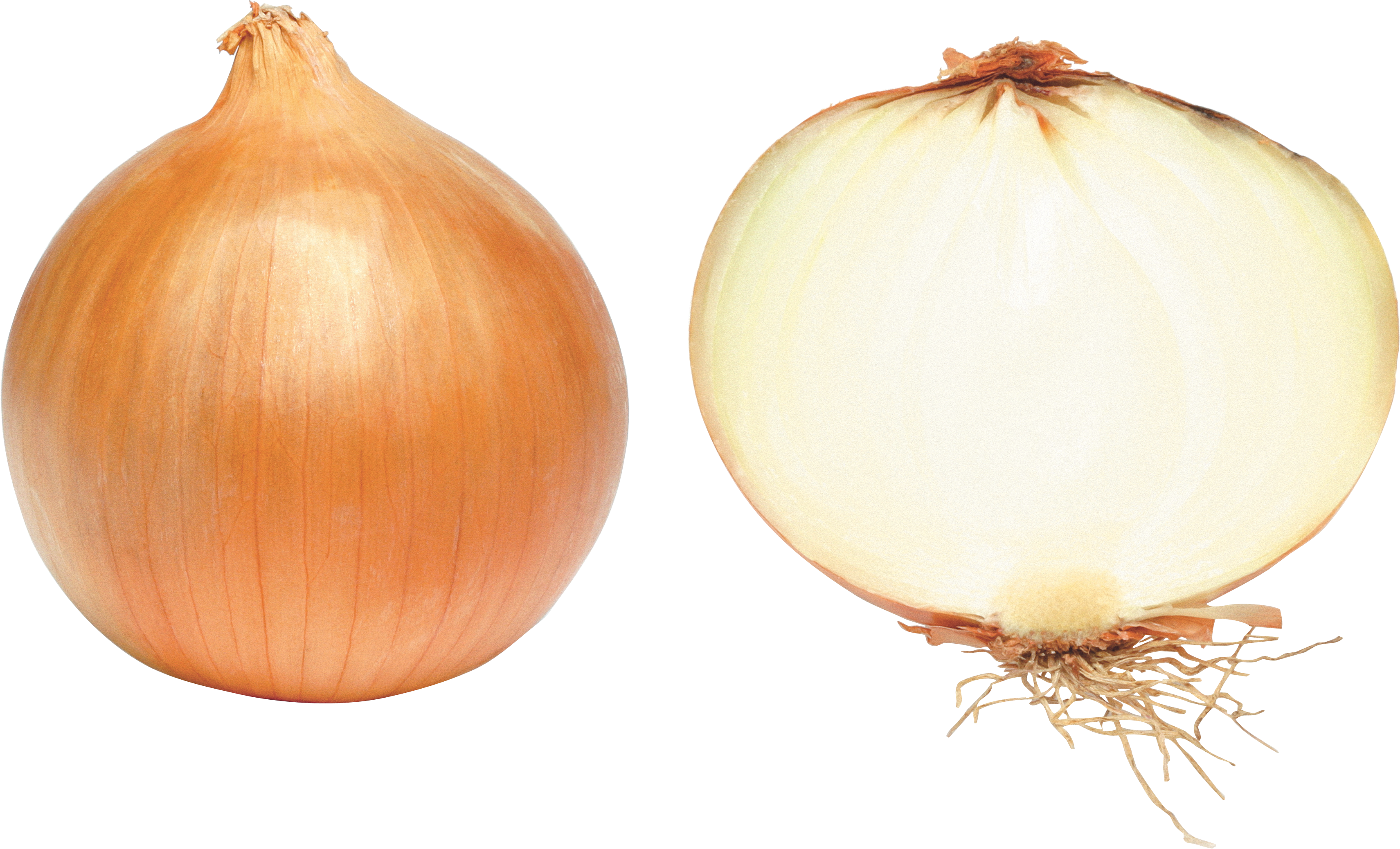 uploads onion onion PNG3819 4