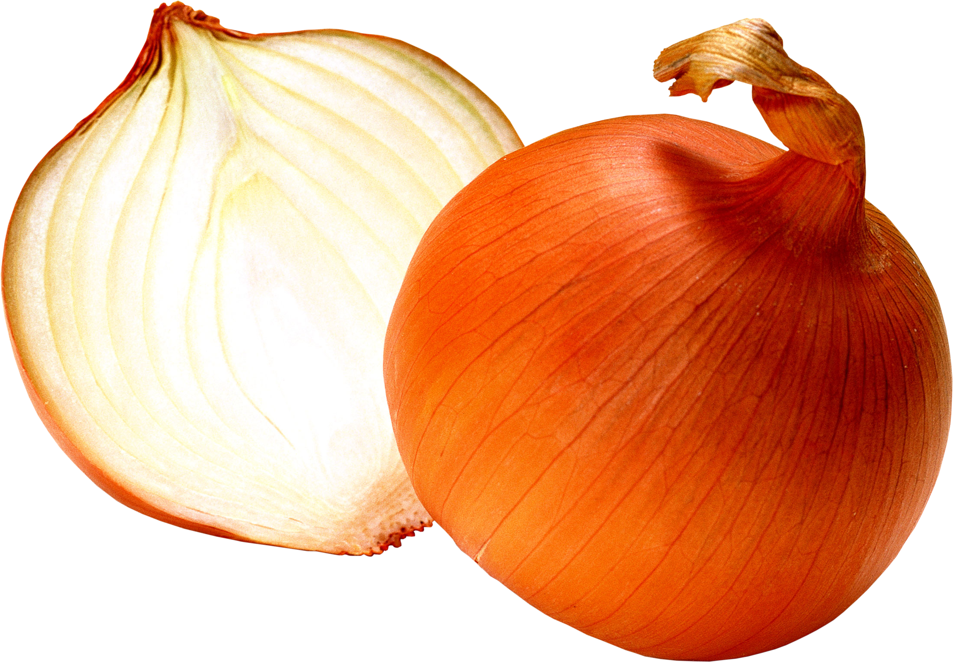 uploads onion onion PNG3820 3