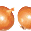 uploads onion onion PNG3827 25