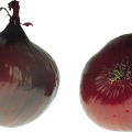 uploads onion onion PNG3829 7