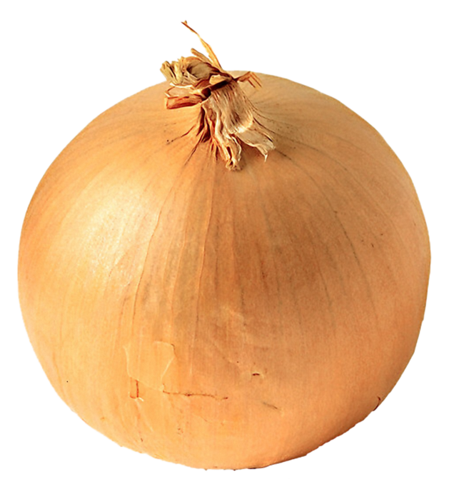 uploads onion onion PNG600 4