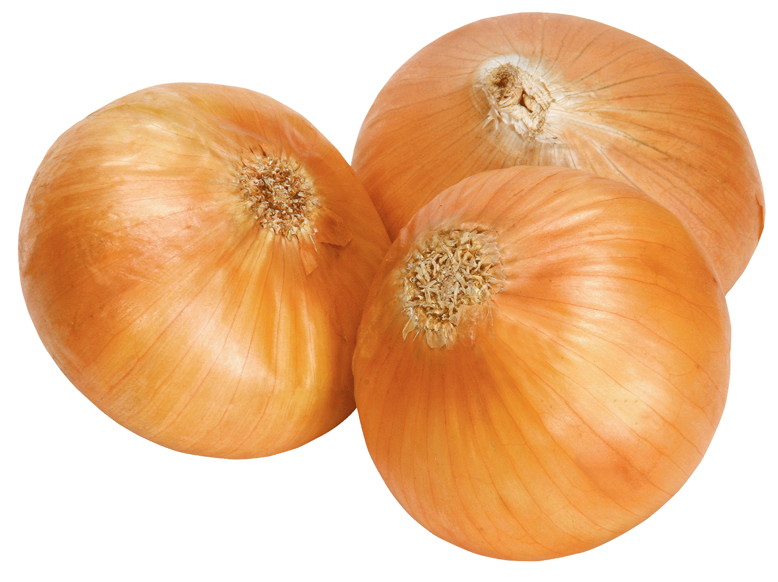 uploads onion onion PNG608 3