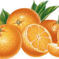 uploads orange orange PNG762 58