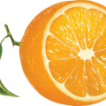 uploads orange orange PNG769 55