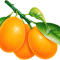 uploads orange orange PNG793 48