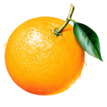 uploads orange orange PNG805 59